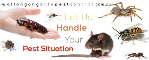 Mice And Rat Pest Control
