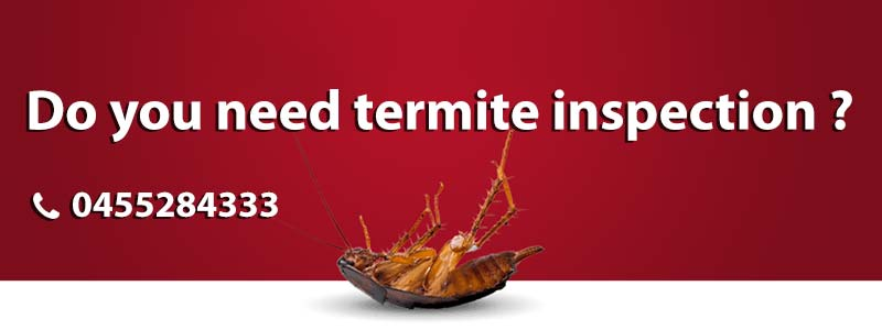 Pest And Termite Treatment